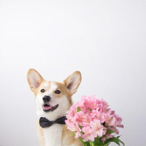 花束とおしゃれでかっこいい犬の壁紙