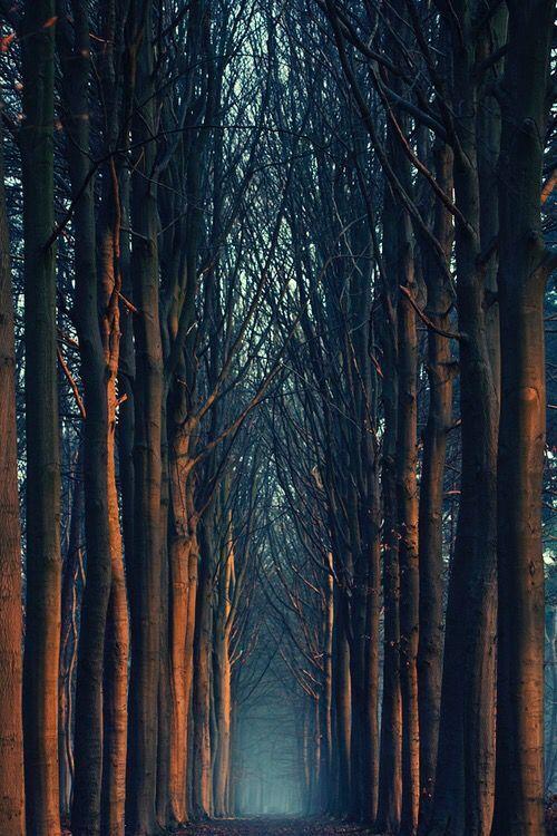 Fotos Para Portadas 13 Fotografía De árboles Fotos De Portada Túnel De árboles