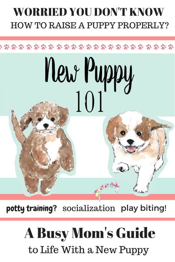 House Training A Puppy Stop Puppy Biting Puppy Toilet Training