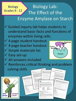 Enzymes (Updated) - YouTube