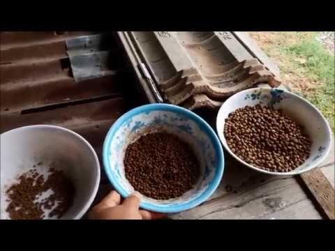 อาหารท ใช เล ยงกบ Youtube