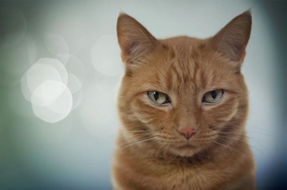 That Special Something: Orange Tabby Cats