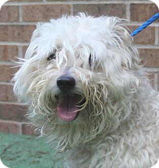 Oak Ridge, NJ Second Chance Pet Adoption League