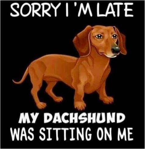 Don T Disturb Our Lone Time Its Special Funny Dachshund