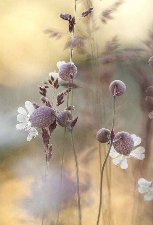 """fleur"" rétrogirl"