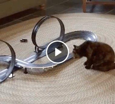 Gato tomando um susto engraçado.