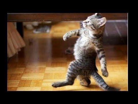 قطط مضحكة Funny Cats Youtube Cats Funny Animal Pictures Funny Animals