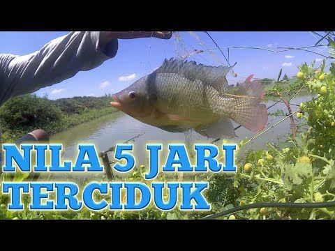 Mancing Ikan Nila Patin Dan Bandeng Dengan Pancing Jaring 27 September Ikan Pancing September