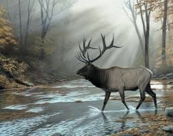 Image result for pictures of elk