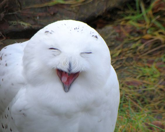 Adorable Happy Animals =)