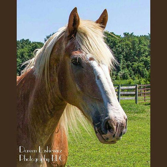 #horse #portrait #pin