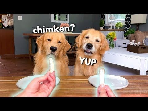 Pin On Funny And Sweet Animal Pics Videos