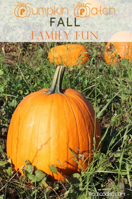 Family Fun idea of going to a pumpkin patch - Great activity to do as with the whole family in the weeks leading up to Halloween. Get Pumpkins for Halloween decorations and have fun together as a family!
