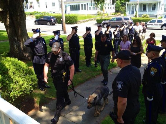 A police dog honored by a salute on his last run.