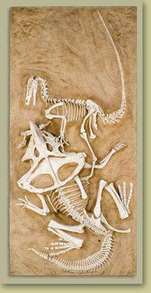 Famous Velociraptor vs. Protoceratops fossil