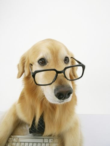 Golden Retriever Wearing Eyeglasses Photographic Print at Art.com