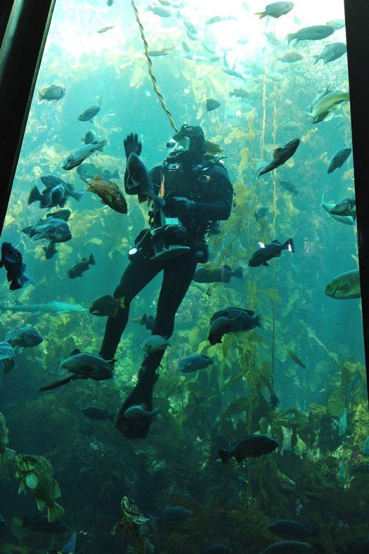 Monterey Bay Aquarium - Monterey, California via @Glorious Treats
