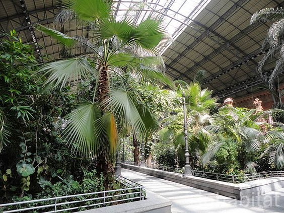 Madrid's Atocha Station Doubles as an Indoor Botanical Garden & Turtle Sanctuary: The Atocha Train Station in Madrid is not just a transportation hub... opened in 1992, rows of tropical trees & plants stretch out over 13,000 ft of space beneath the station's arched roof. Commuters can relax under the leafy palms, or watch the turtle pond while waiting for their next train. (Atocha Station Tropical Garden Madrid, via Flickr):