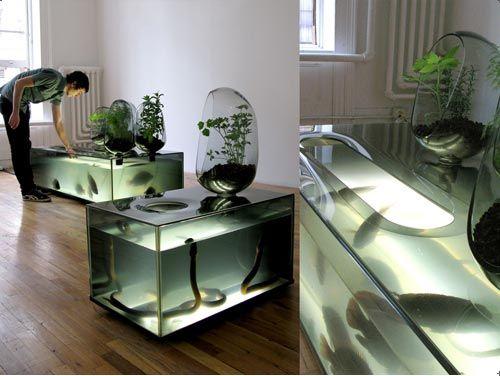 Diy aquaponics fish tank check out my personal for Aquaponics aquarium
