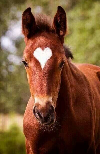 I call it a miracle that a horse can be born with a perfect heart for a temple marking!: