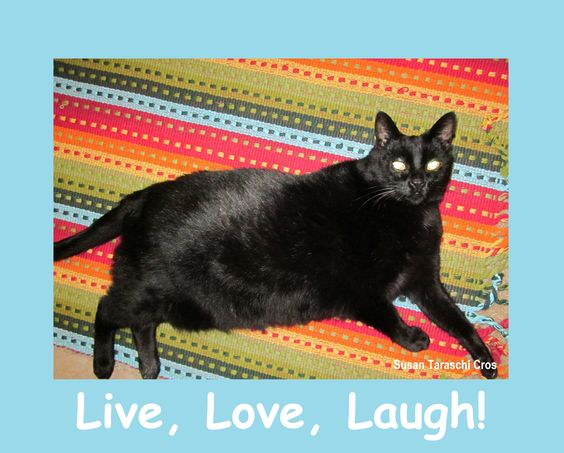 Live, Love, Laugh!