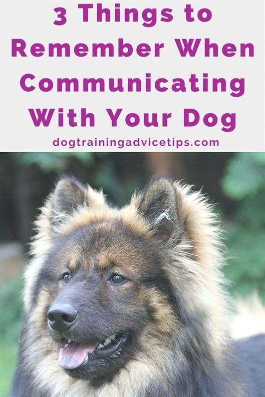 Dog Training In Ct Dog Training Reddit Dog Training 47130 Dog