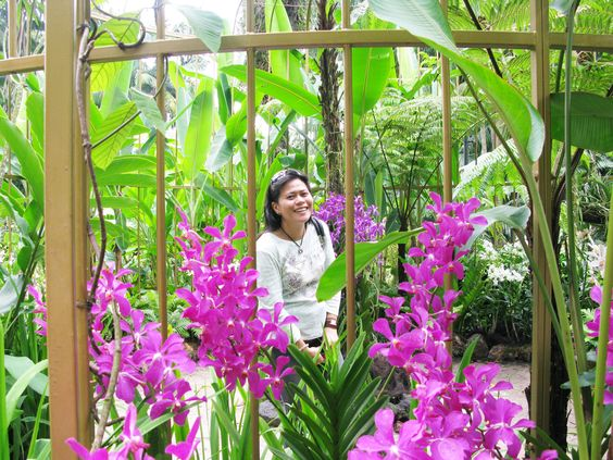 Orchids in Singapore Botanical Gardens