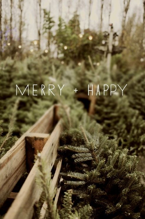 merry + happy | christmas trees: