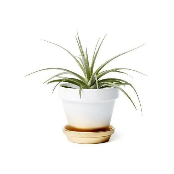 Luxe Tones Ombre Planter