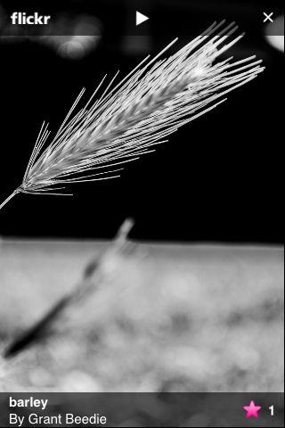 Photographer Grant Beedle
