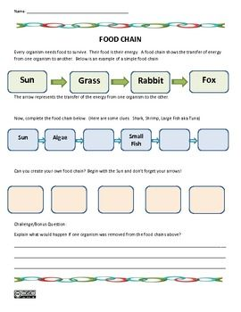 Printables Food Chains Worksheet food chain science worksheet chains worksheets and worksheet