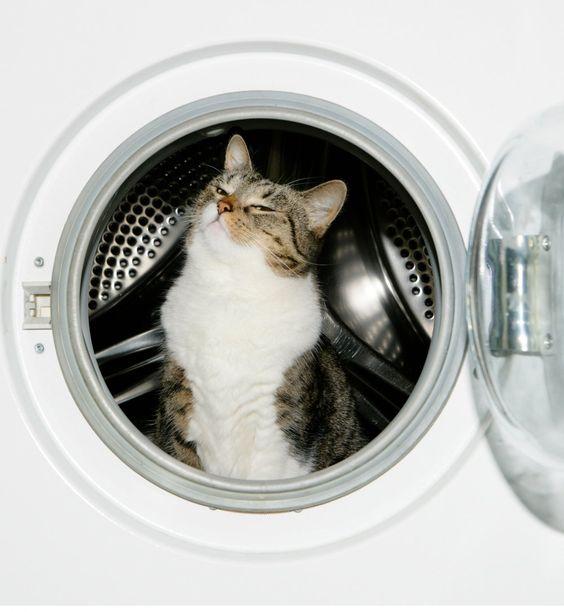 20 problèmes que seules les personnes qui ont un chat peuvent comprendre