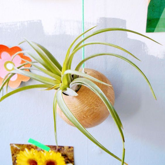 Hipaholic: From Here To Etairnity + Giveaway. Find here: www.etairnity-airplants.com/collections/all