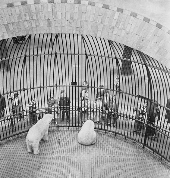 Popular Roman Vishniac early s People behind bars Berlin Zoo Spectator Knowledge Ethics Pinterest Zoos and Roman