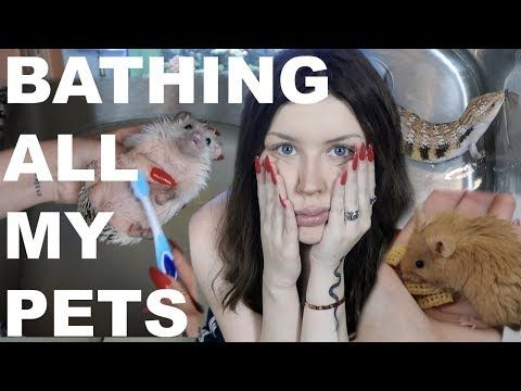 I Tried To Bathe All My Pets Youtube Pets My Animal Social