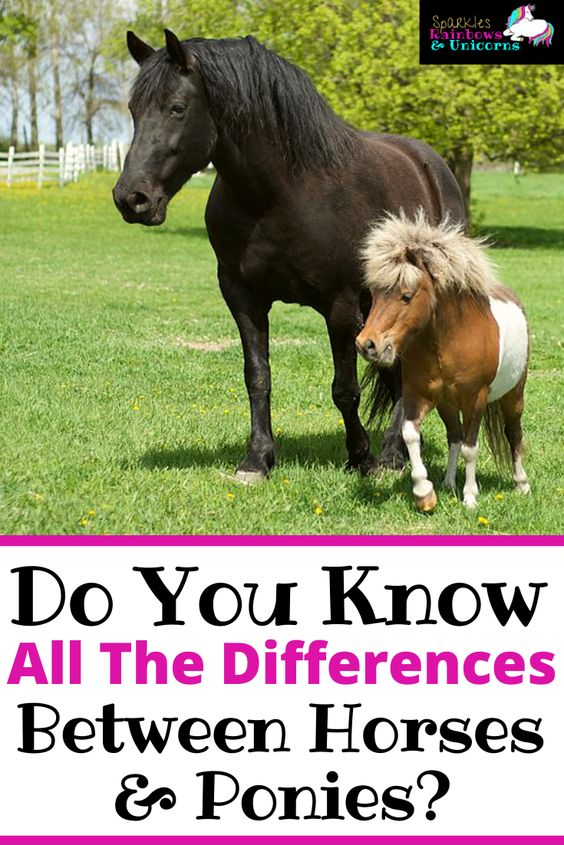 Learn facts about horses and ponies. Find out what they have in common   as well as their differences. Are they the same species? How can you   tell the difference between a horse and a pony? Is one better than the   other?