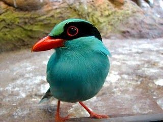 Color combos in nature...Teal, orange, lime and black
