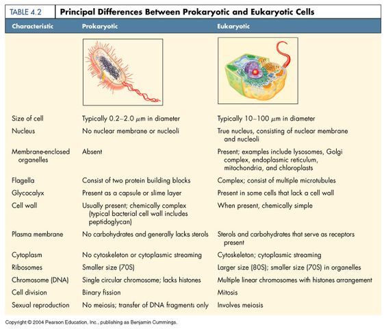 the differences between prokaryotic and eukaryotic cells microbiology pinterest the o 39 jays. Black Bedroom Furniture Sets. Home Design Ideas