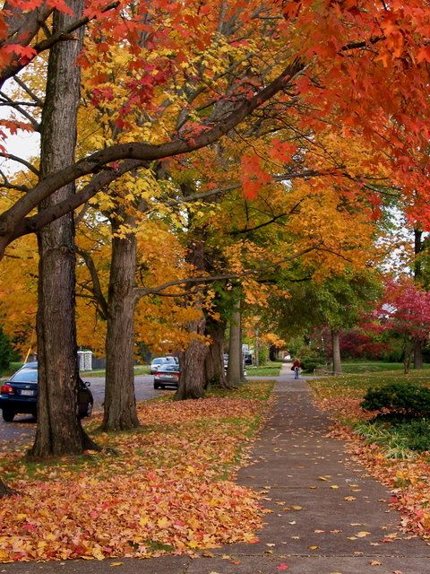 Huntington, WV in the fall