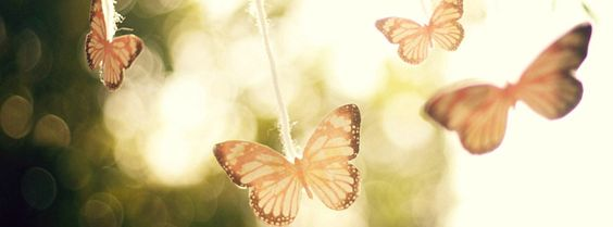 Butterflies and Sunshine Facebook Covers