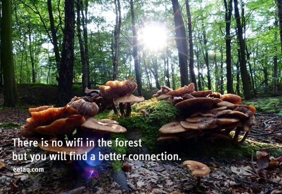 There Is No Wifi In The Forest - Quote