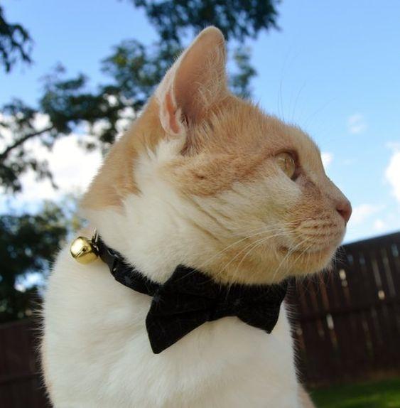 Black Halloween cat collar, black bow tie for cat, cob webs cat bow tie, halloween cat bow tie, cat