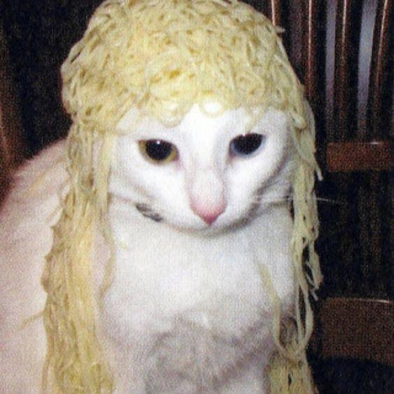 Pasta cat.