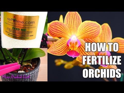 1458 Orchid Care For Beginners How To Fertilize Phalaenopsis Orchids Chose The Best Orchid Food Youtube Orchid Food Orchid Care Phalaenopsis Orchid