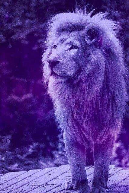 Fondo pantalla de  león *o*