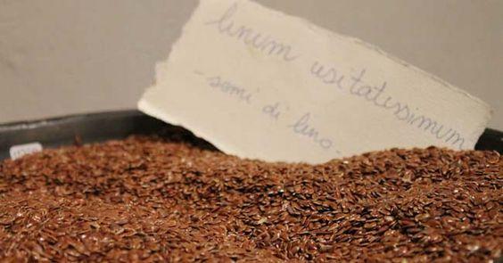 Olio di semi di lino: proprietà e benefici