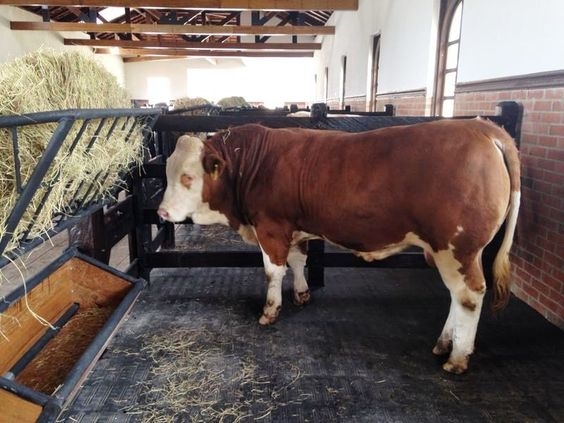 Pin On Vacas