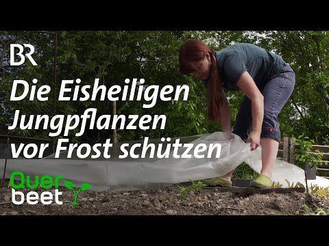 Jungpflanzen Vor Frost Schutzen Tipps Von Sabrina Youtube Pflanzen Jungs Frostschutz