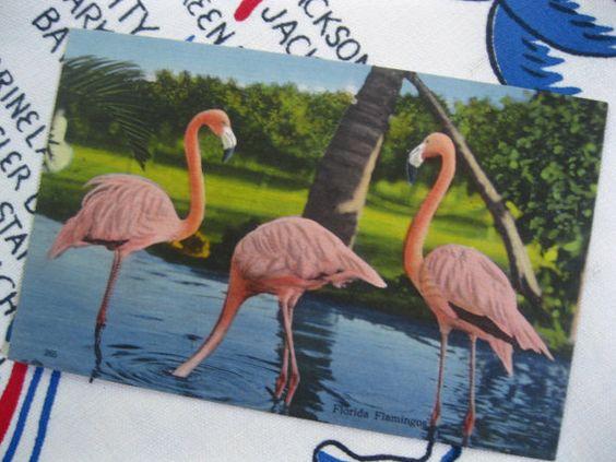 Vintage Florida postcard - Florida flamingos at the Rare Bird Farm Miami - linen souvenir postcard