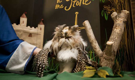 This cat is obviously thrilled to be styled as Archimedes, the owl from The Sword in the Stone. (Photo by Dustin Fenstermacher.)